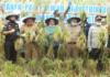 Program Penguatan Pangan Lokal Papua Barat