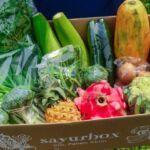 Mendatangkan Sayur Segar dari Para Petani Melalui Sayurbox