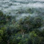 Spesies Tumbuhan di Papua Terbanyak di Dunia