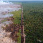 KPK: Ekspansi Sawit Papua Punya Beberapa Pelanggaran