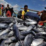 Pusat Perikanan Papua